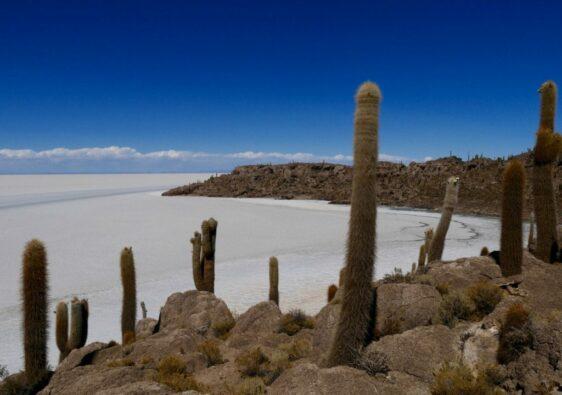 Isla Incahuasi dans le salar d'Uyuni