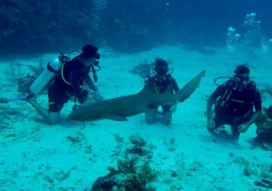 Plongée sous-marine au Belize