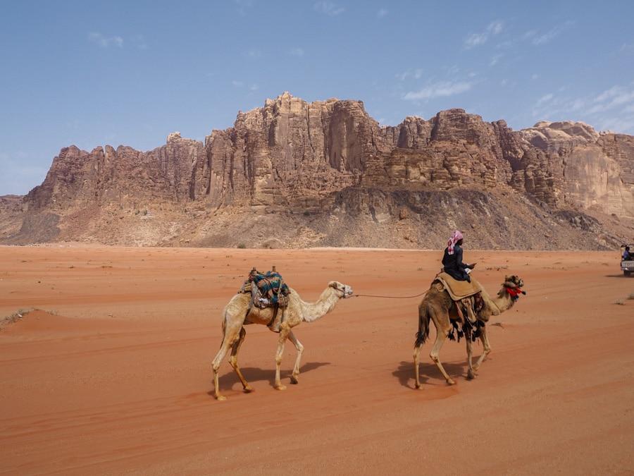Dromadaires dans le Wadi Rum en Jordanie