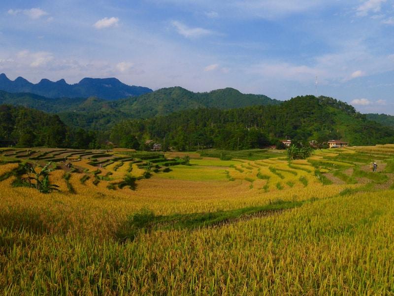 Rizières en terrasse à Ha Giang au Vietnam