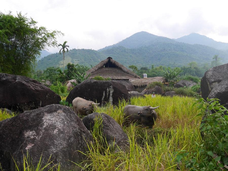 Maison et rizières à Ha Giang au Vietnam