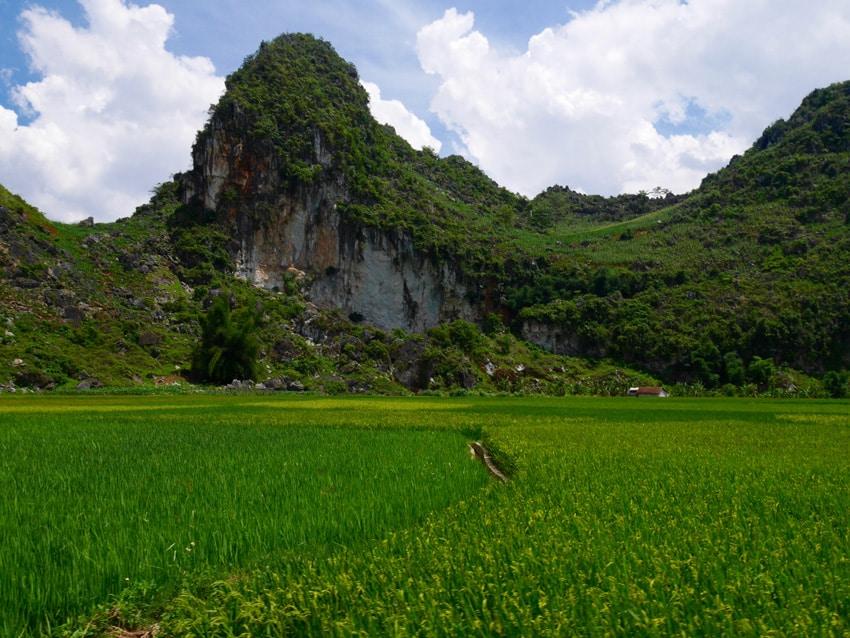 Formation karstique et rizière Ha Giang