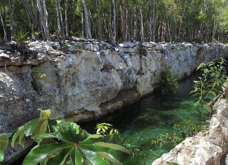 Cenote ouvert Casa Tortuga