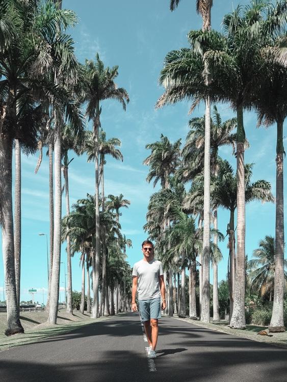L'allée Dumanoir à Basse-Terre en Guadeloupe