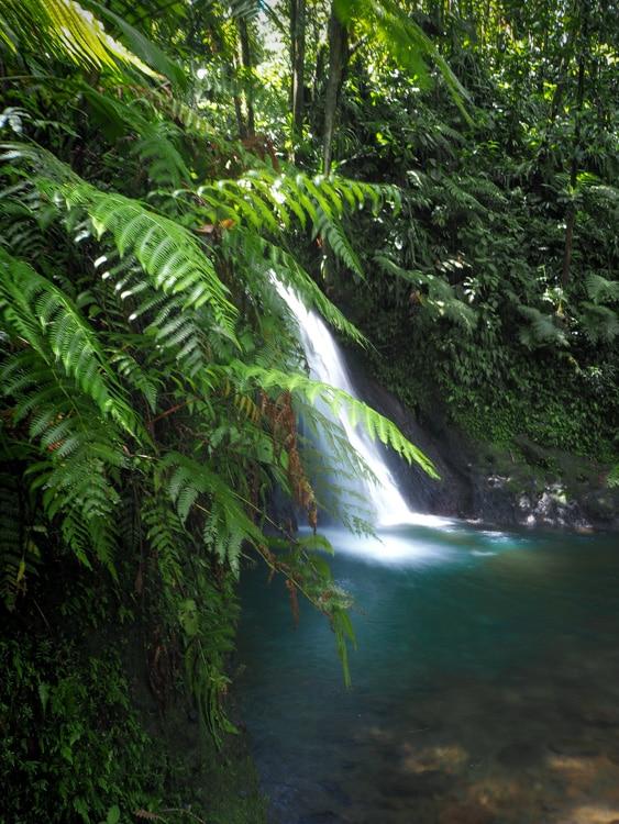 Cascade aux écrevisses Basse-Terre Guadeloupe