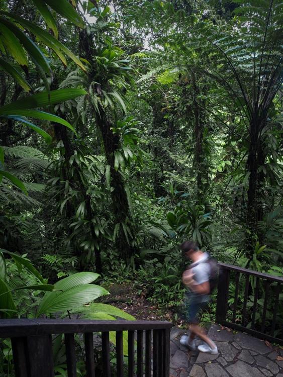 Route de la traversée Basse-Terre