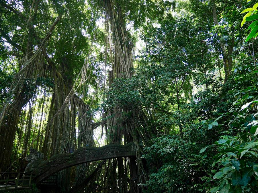 La forêt des singes de Bali en indonésie