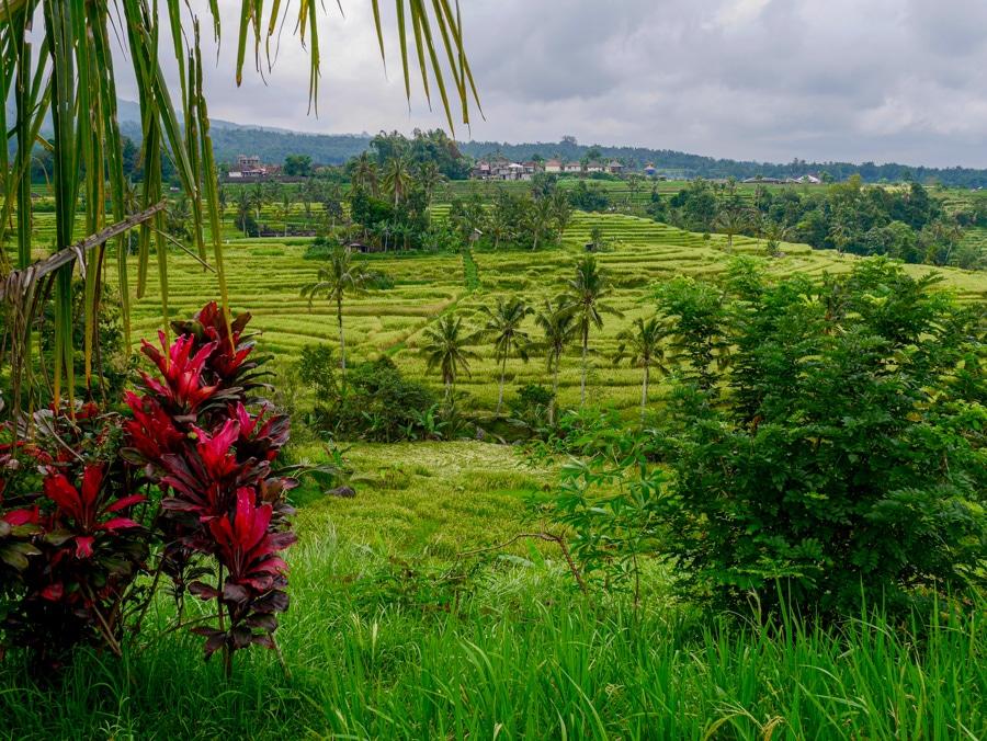 Les rizières de Jatiluwih à Bali